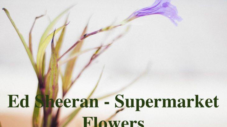 正面向いて歌ってしまった!! Ed Sheeran Supermarket Flower cover